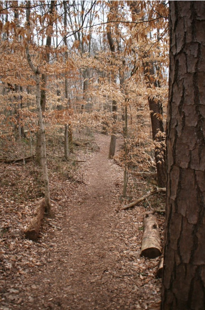 Trail at Ijam's Nature Center in Knoxville, Tennessee