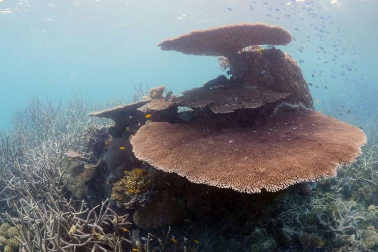 Saving Atlantis (2019) - The beauty of coral.