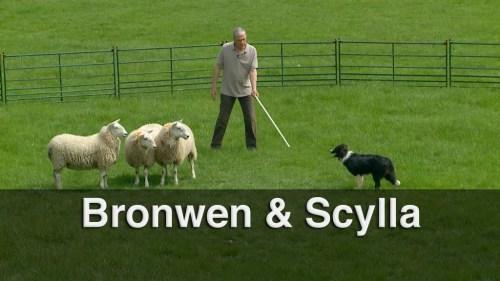 Compare trainee sheepdogs Bronwen and Scylla