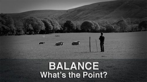 Understanding the point of balance is vital for training sheepdogs and stock dogs