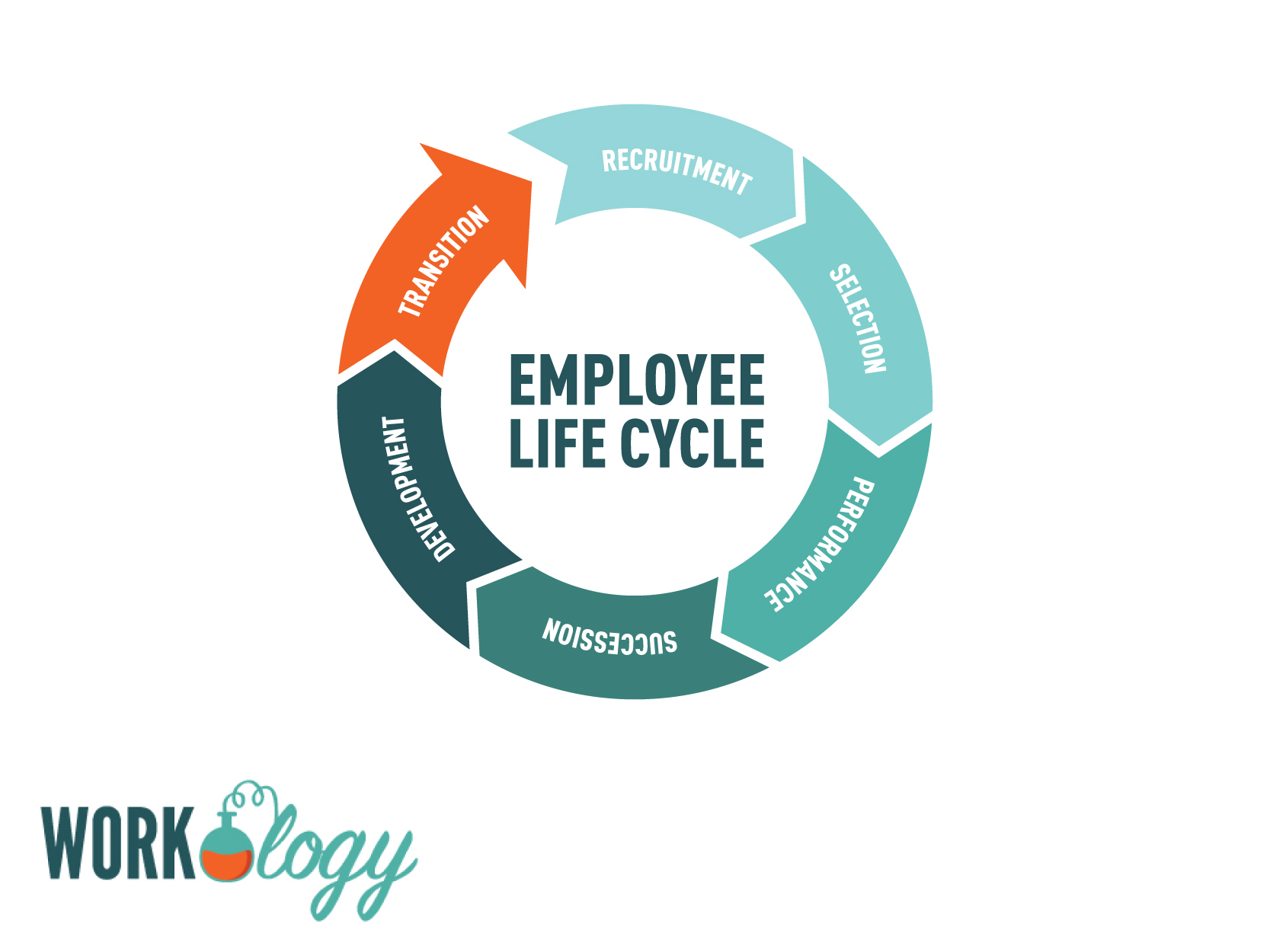 employee life cycle, recruitment, hiring, performance, succession, development, transition