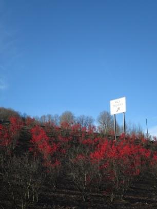 les arbustes d'autoroute aussi sont jolis
