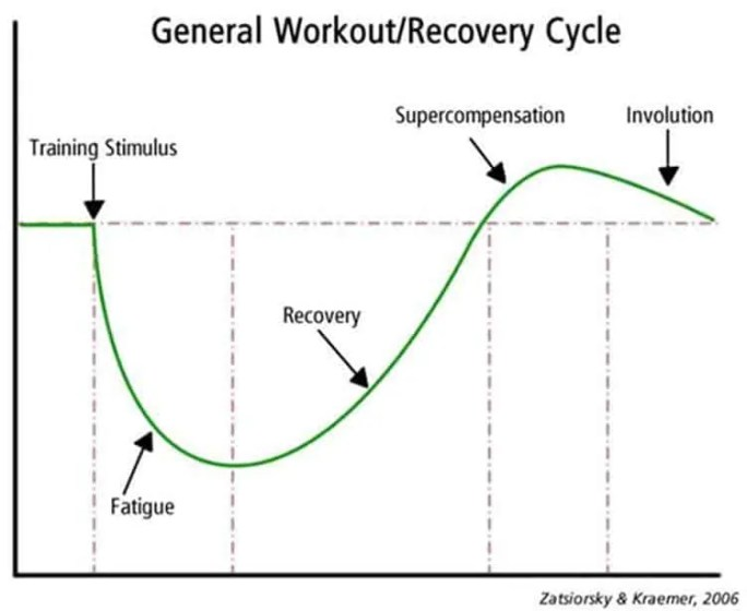 SRA Curve: workout and recovery cycle