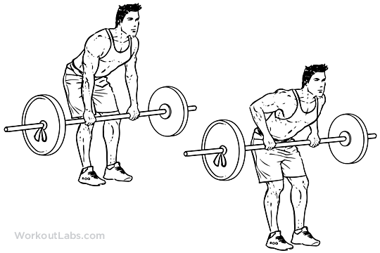 https://i1.wp.com/workoutlabs.com/wp-content/uploads/watermarked/Bent_Over_Barbell_Row.png