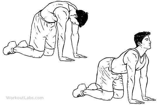 Cat Back Stretch