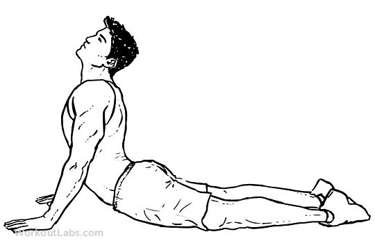 Cobra Abdominal Stretch / Old Horse Stretch