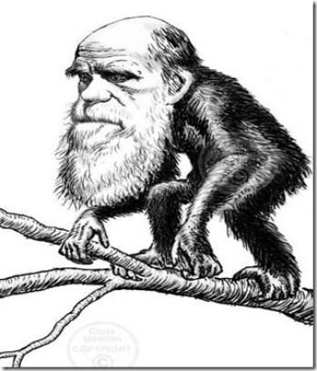 darwin-monkey-wallace-cjmadden_thumb4