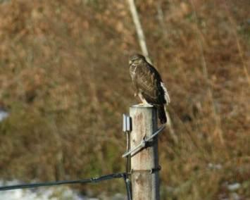 Bird at lodge