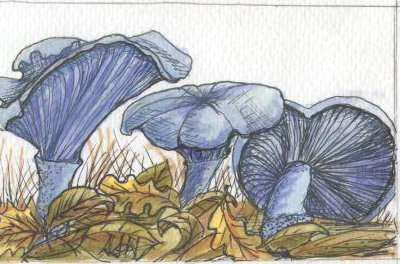 Indigo Mushrooms by Susi Hall
