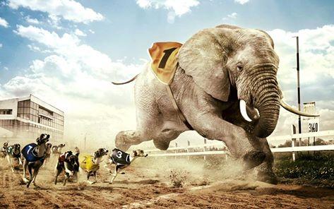 Sindromul Elefantului Activ-Evolution HCC