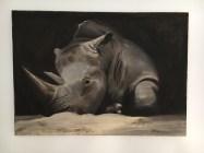 Rhinoceros Leopold