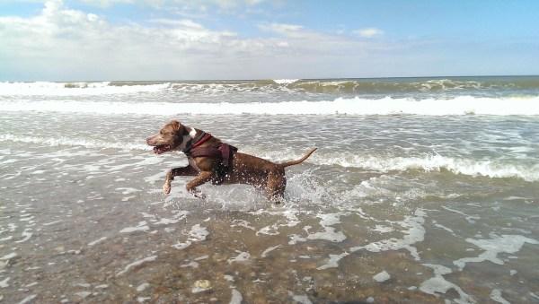 Собака очень рада видеть море