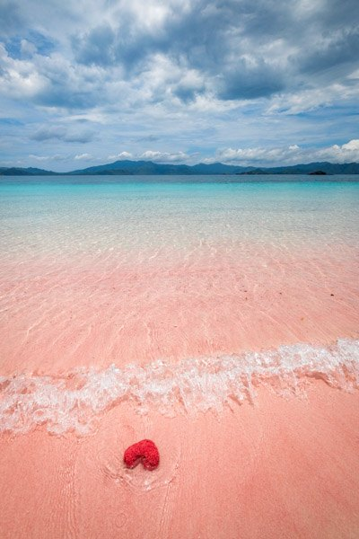 Arinahabich / getty images beachgoers are warned to keep some distance from these venomous animals whose stings. Pink Beach Komodo Island Indonesia S Famous Pink Sand Beaches