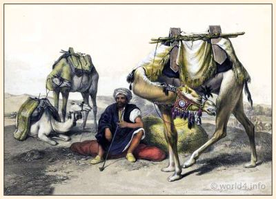 Traditional Arabian costume. Camels Resting in the Sherkiyeh