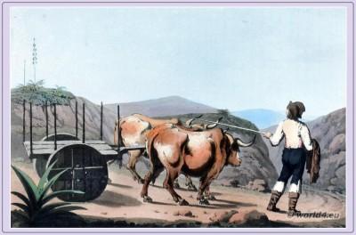Estremadura, Landscape, wine, region, coastal province, Portugal,Portuguese, costumes