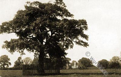 Royal Oak. Boscobel. King Charles II.