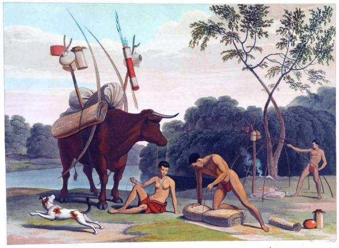 Samuel Daniell, Griqua, Koranna, Khoemana, Korana, South Africa, Tribe