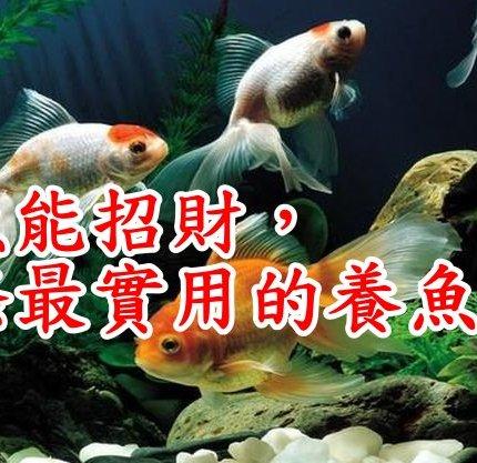 養魚能招財,10條最實用的養魚風水