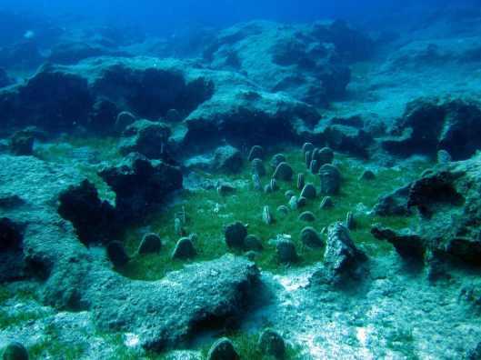 fan mussel field Kas Turkey