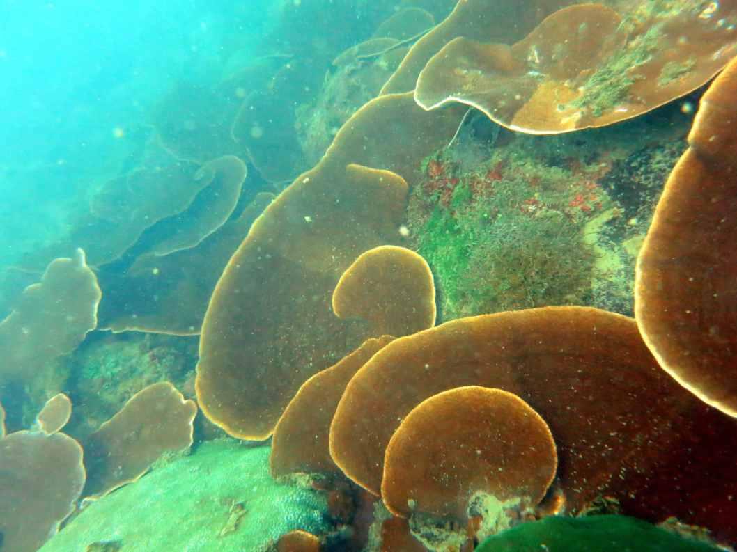 scuba diving coral goa grande island