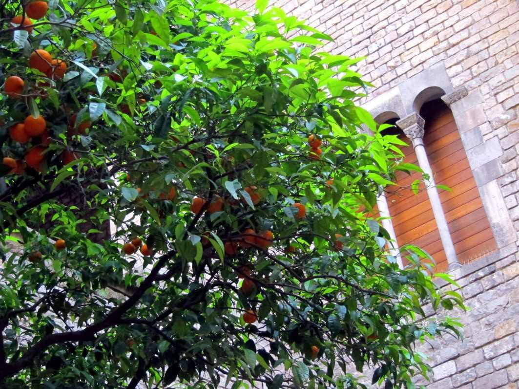 Gothic district El Gotico Barcelona