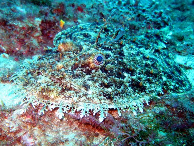 anglerfish Cadaques