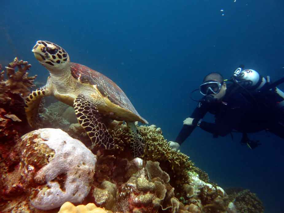 Diving Moalboal The Philippines -  - cheapest diving destinations