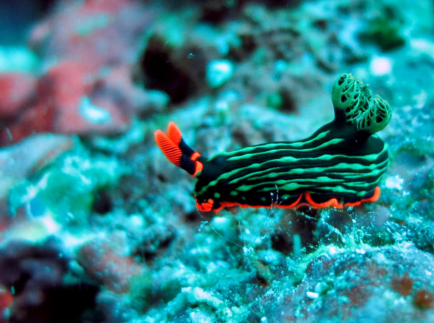 scuba diving Pescador Island Philippines