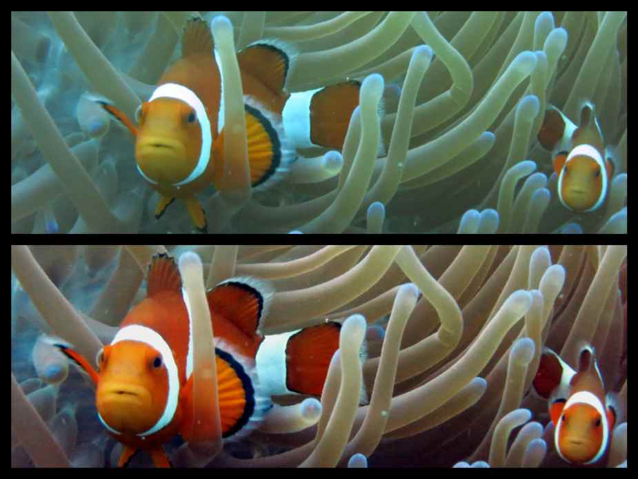 How to take pictures underwater - editing with Gimp