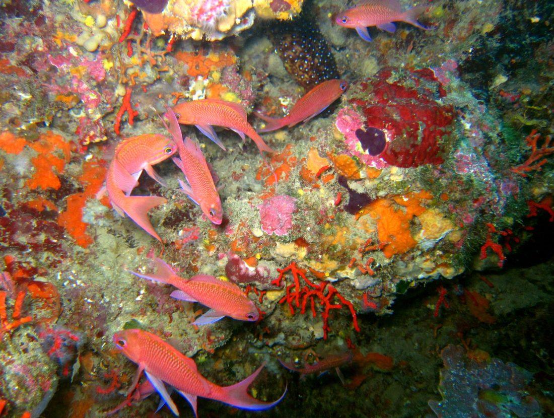 Plongée Costa Brava Cadaques