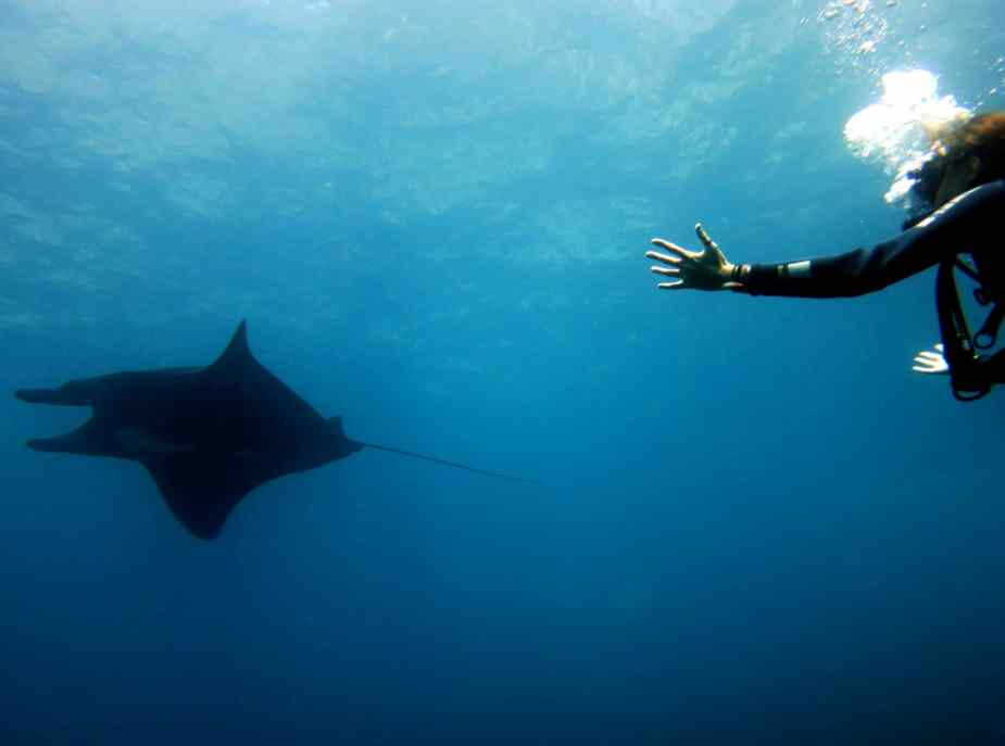 manta ray - best dive sites Bali