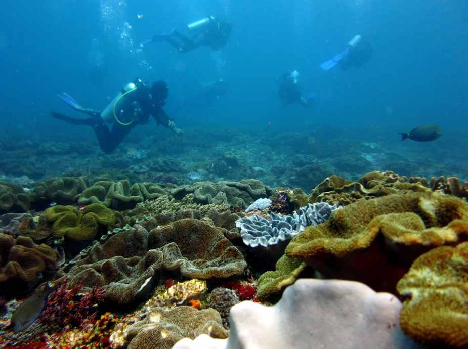 drift diving - best dive sites Bali