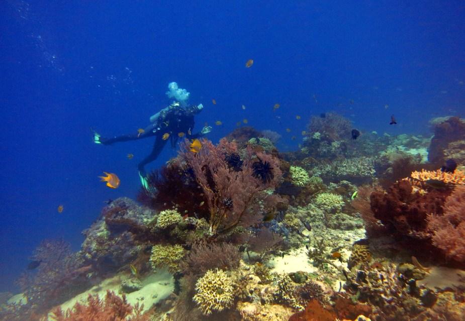 Diving in Menjangan Island