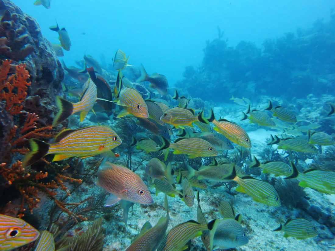 Scuba diving in the Florida Keys
