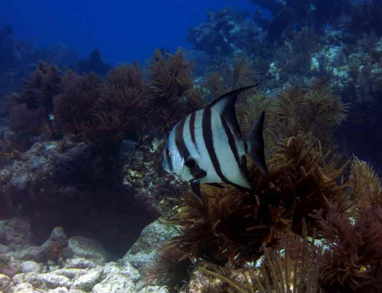 Scuba diving Key Largo Molasses Reef USA