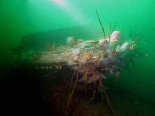 Speed boat wreck Scuba diving St Cats Loch Fyne Scotland