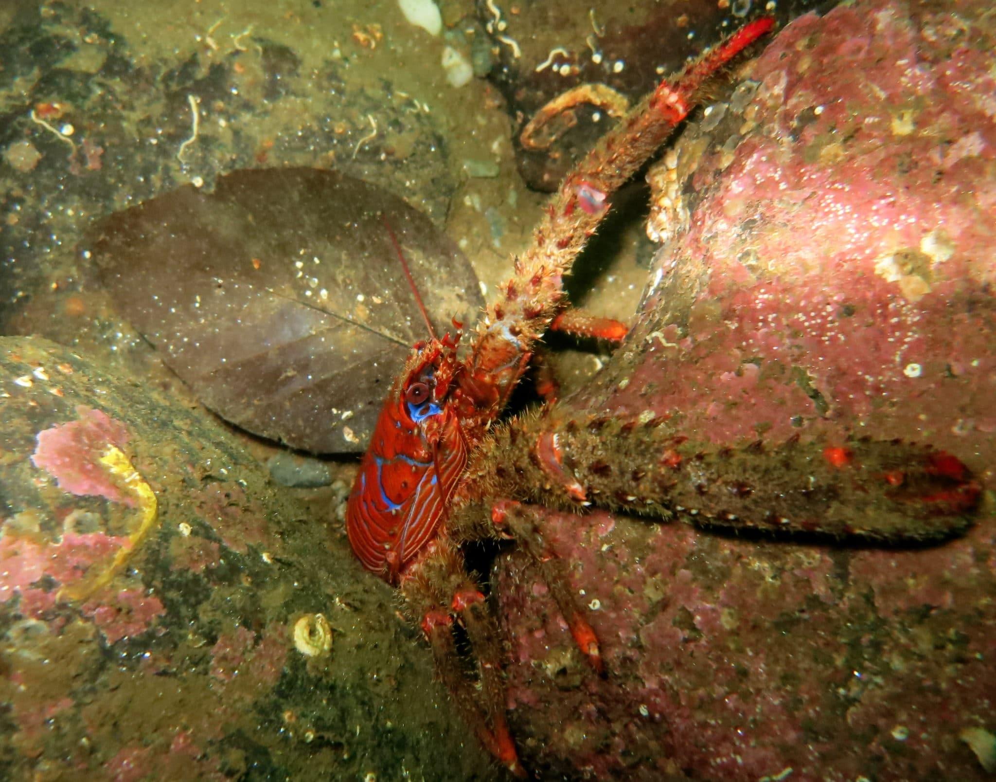 Loch Fyne - scuba diving in Scotland