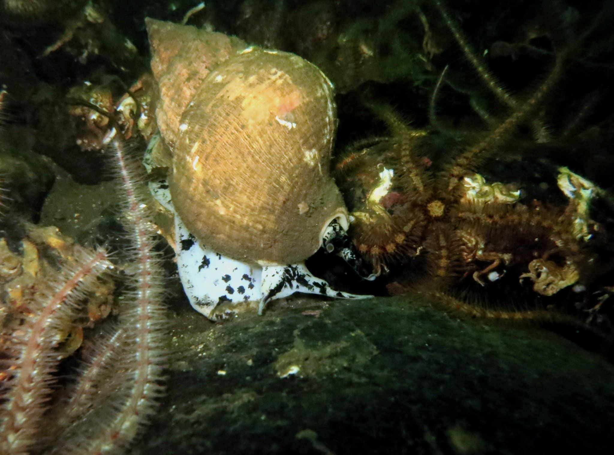 Loch Creran - scuba diving in Scotland