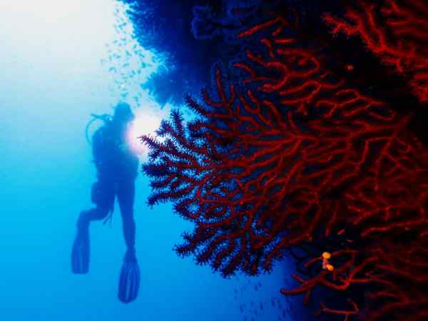 Red gorgonians Scuba diving Portofino Italy - how to take pictures underwater - photo sous-marine