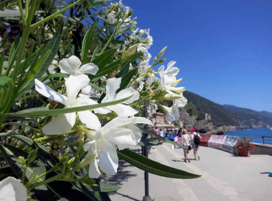 Monterosso Cinque Terre Italy