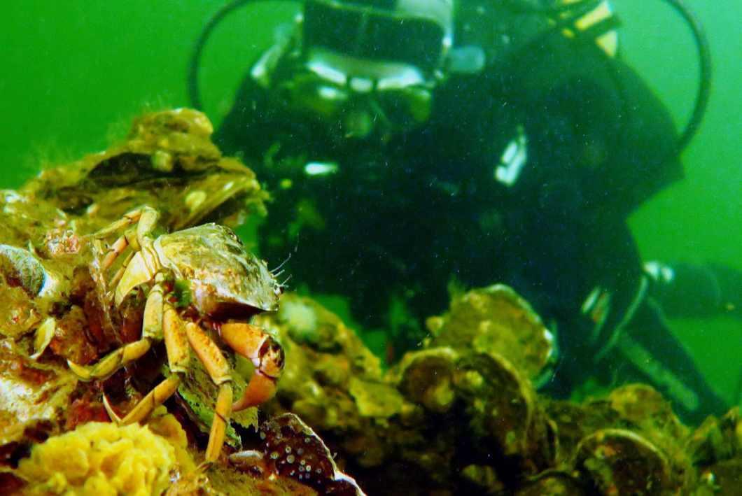 Scuba diving in Dreischor Zeeland Netherlands