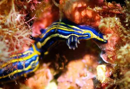 doris nubibranch scuba diving porquerolles France