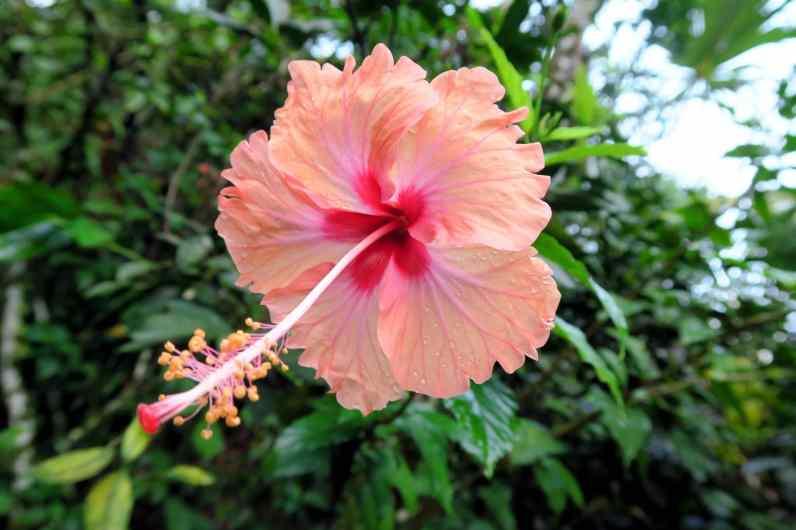 Flower Rio Cangrejal Pico Bonito National Park Honduras