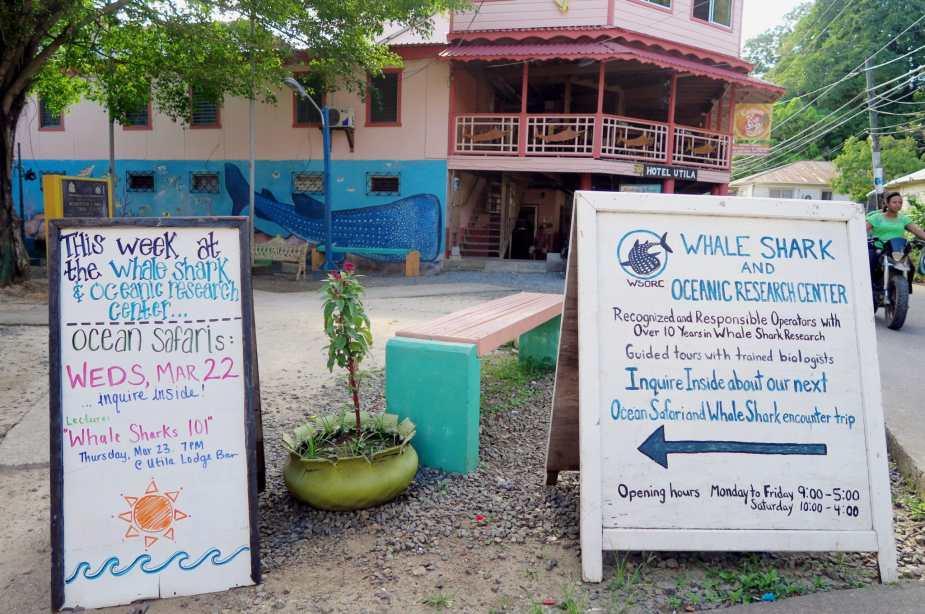 Whale Shark and Ocean Research Center Utila Honduras