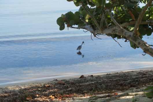 Playa Chepes Public Beach Utila Honduras
