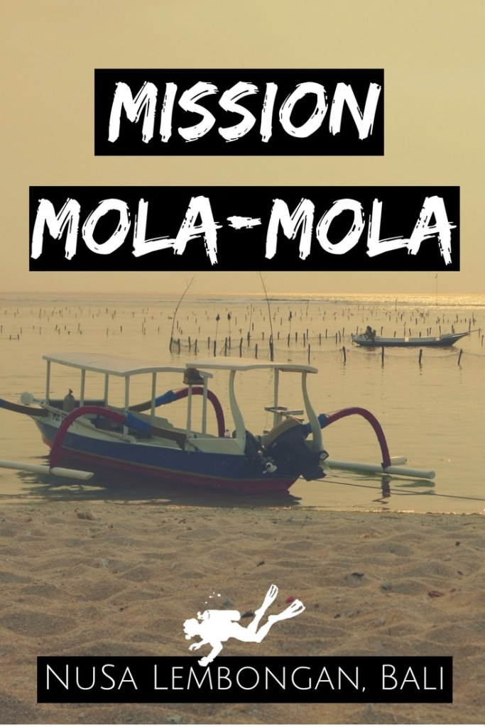 Mission Mola-Mola Scuba diving with Sunfish Nusa Lembongan Bali