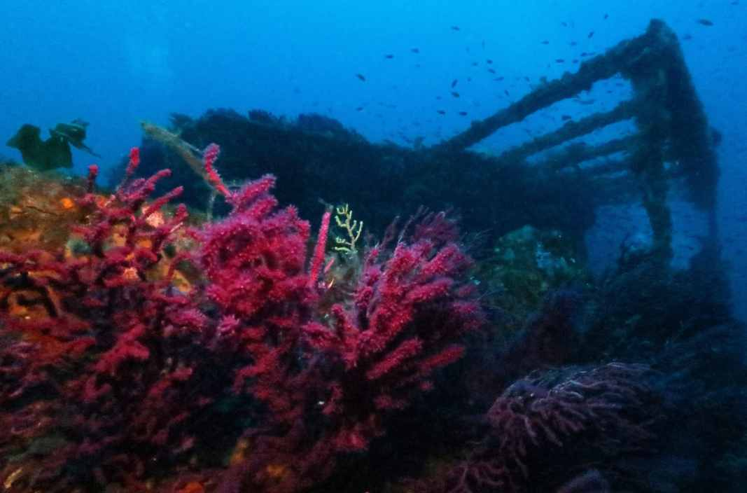 Wreck diving Le Grec Porquerolles France