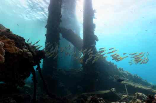 Mala Wharf shore diving Lahaina Maui Hawaii