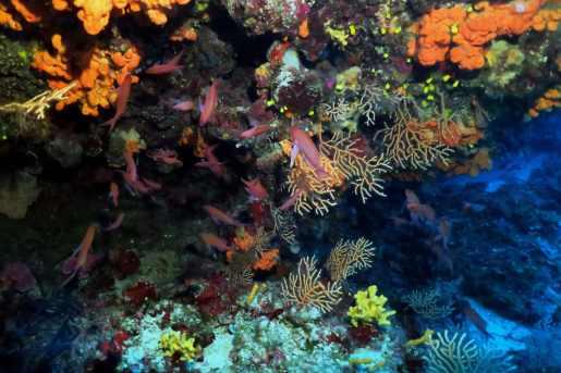 scuba diving Alonissos Greece