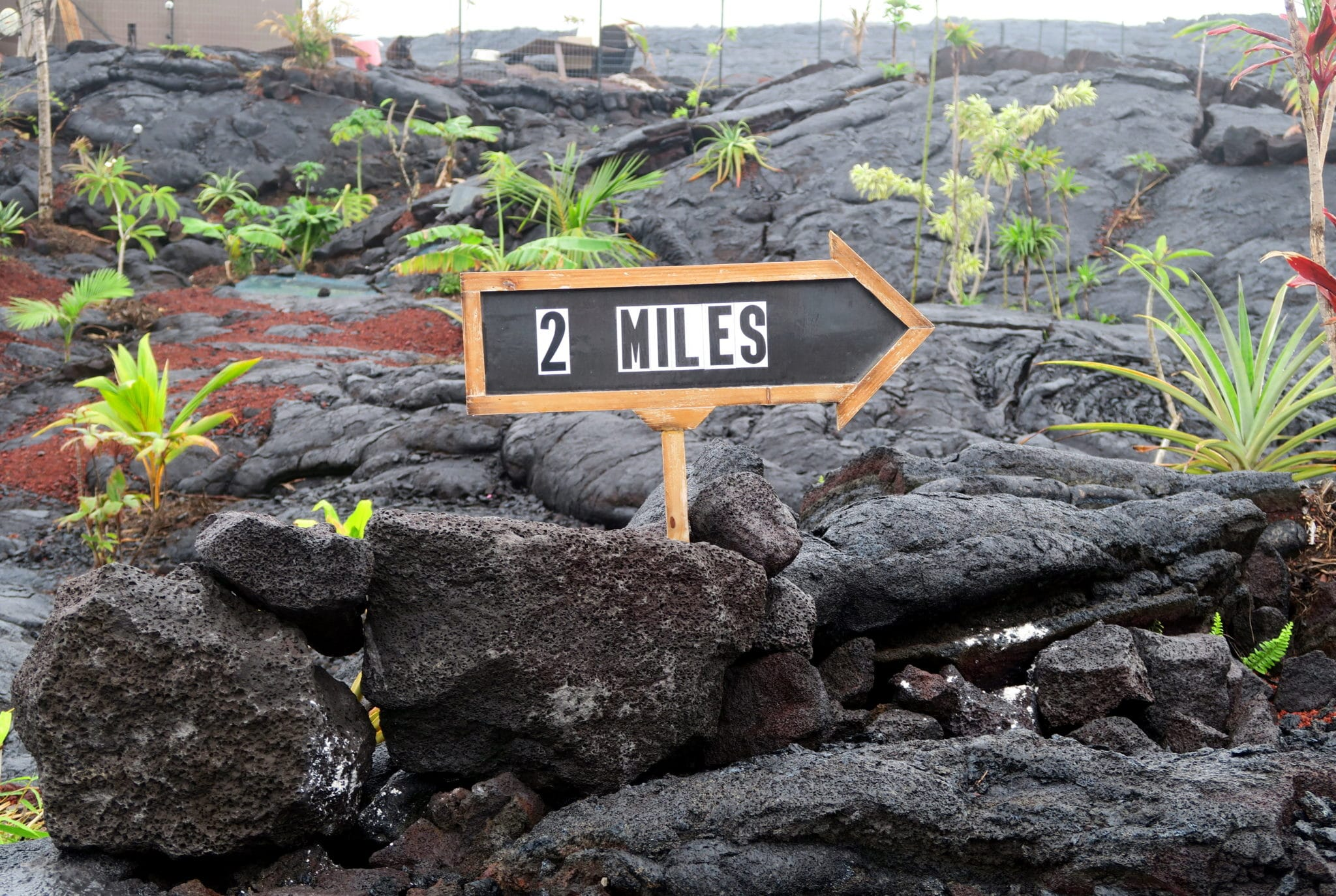 Lava Field Kalapana Big Island Hawaii